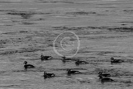 20140121-123950-North_Kessock-4521
