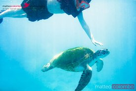 Child swimming with sea turtles