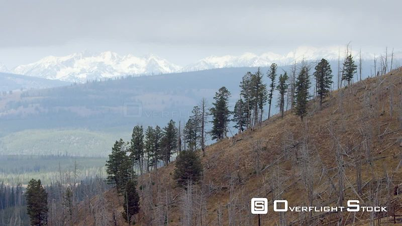 Snow-covered peaks tower over the forests and meadows on the western edge of Yellowstone National Park