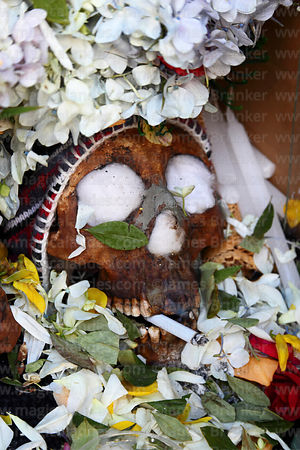 Skull with offerings of coca leaves ( Erythroxylum coca ) smoking a cigarette, Ñatitas festival, La Paz, Bolivia