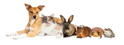Row of Domestic Pets
