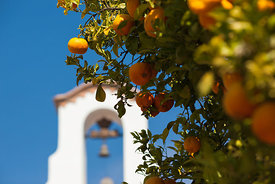 Orange tree next to St Anton church in Competa