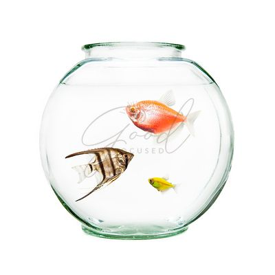Pet Fish In Round Bowl