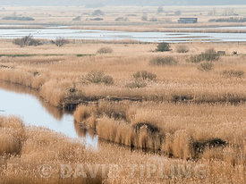 View from Dunwich Hearh across Minsmere RSPB Reserve winter