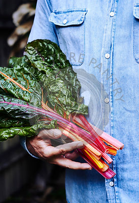 Person holding freshly picked bunch of rainbow chard.