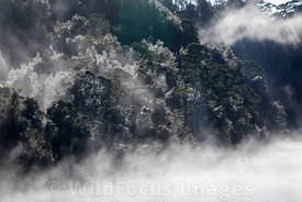 Iced up trees on a chilly winter morning along the Gordon river, Franklin - Gordon Wild Rivers National Park, Tasmania, Australia; Landscape