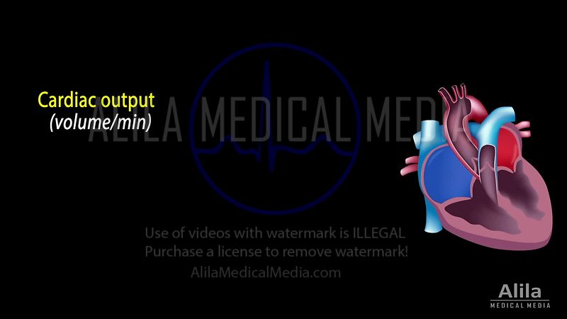 Cardiac output, stroke volume, EDV, ESV, ejection fraction NARRATED animation.