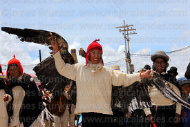 Boy wearing a dead Andean condor (Vultur gryphus) on his back, Virgen de la Candelaria festival, Puno, Peru