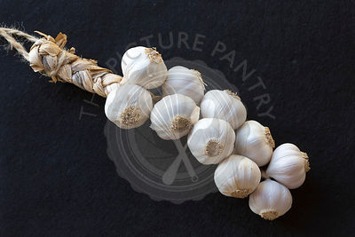 plaited bunched Spanish grown garlic against plain black background,