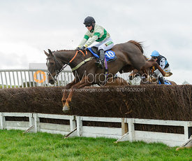 PENELOPE PIPS (Miss C. Wyatt) - Race 4 - Ladies Open - The Cottesmore Point-to-point 26/2