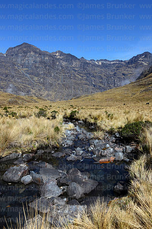 Stream and high altitude puna grassland in the Choquetanga Valley, Cordillera Real, Bolivia