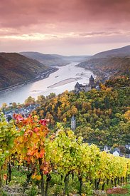 Sunrise over autumn vineyards, Bacharach, Rhineland, Germany