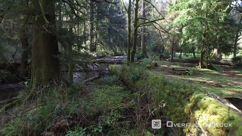 Aerial Footage of Fallen Tree Over Stream, Oregon USA