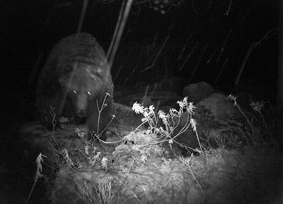 Camera Trap Photos photos