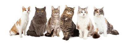 Row of Various Breed Cats