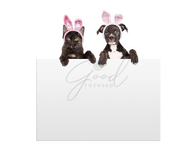 Easter Kitten and Puppy Holding Sign