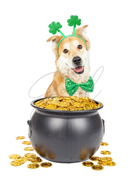 St Patricks Day Dog With Pot of Gold