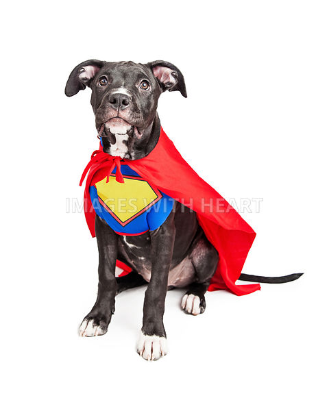 Superhero Puppy Dog Wearing Vest and Cape