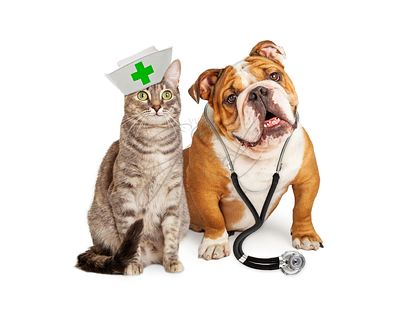 Dog and Cat Veterinarian and Nurse