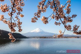 Mount Fuji with cherry blossom, Fuji Five Lakes, Japan
