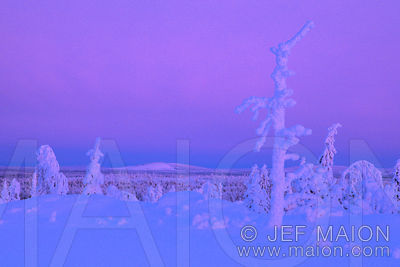 Snow-covered dead tree trunk and lonely fell landscape under a pink sky