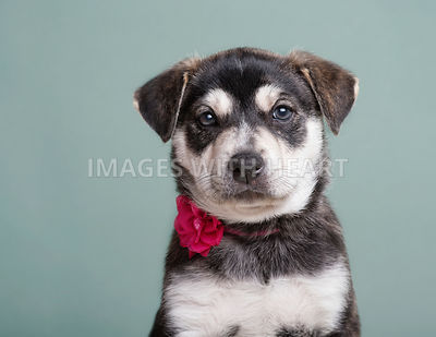 Adorable puppy wearing a flower collar