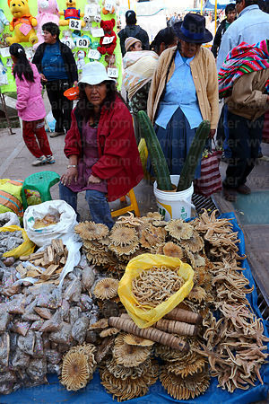 Woman selling dried starfish (said to bring good luck) and other items for ceremonies in market, Cusco, Peru