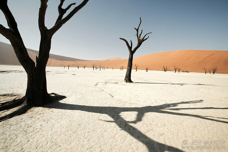 Dead tree shadow on sterile land