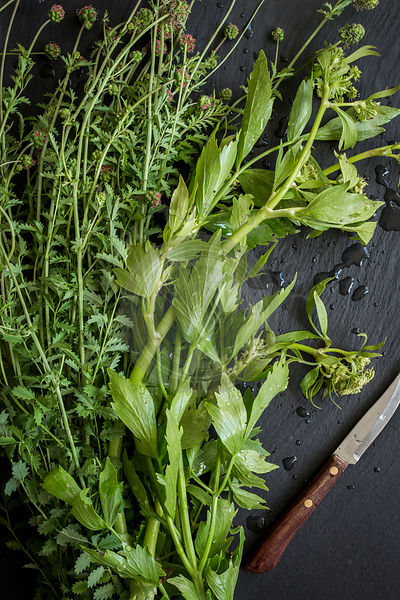 Herbs fresh from the market on slate board. Top view