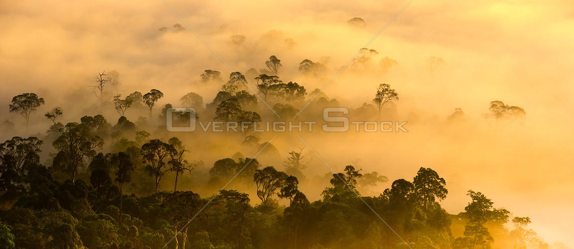 Mist hanging over lowland rainforest just after sunrise in the heart of Maliau Basin - Sabah's 'Lost World'. Lobah Camp, Maliau Basin, Borneo.
