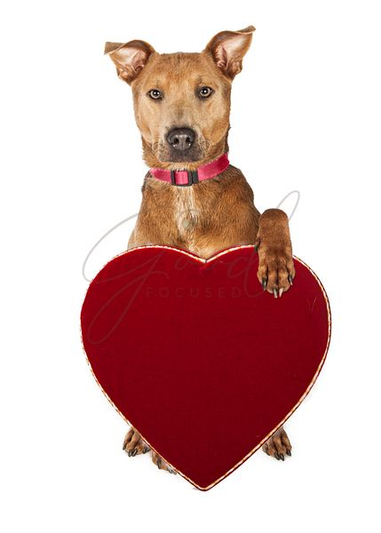 Cute Dog Holding Candy Heart Box