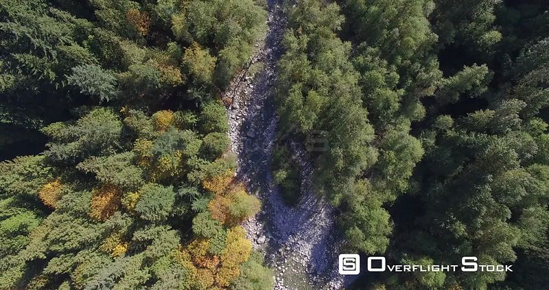 Drone Video Vancouver Area Forest Canada