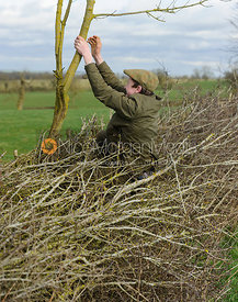 Hartley Crouch in a hedge - The Cottesmore Hunt at Ladywood Lodge 28/2