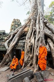 Cambodia, Angkor Wat. Monks inside Ta Prohm temple