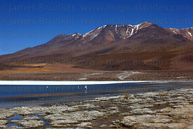 Tourists visiting Laguna Cañapa , Cerro Cañapa volcano in background , North Lipez region, Bolivia