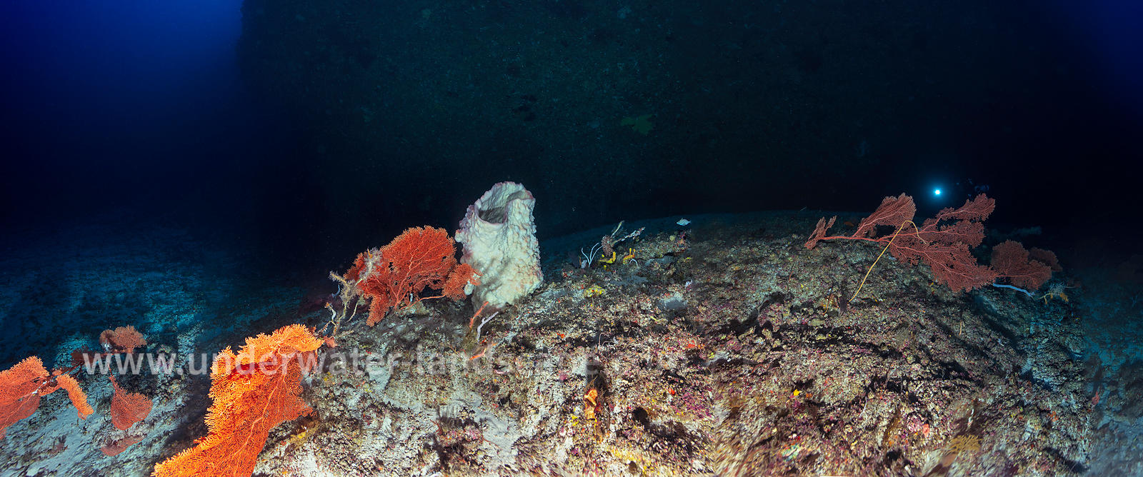 Underwater panoramique view at 80 m deep