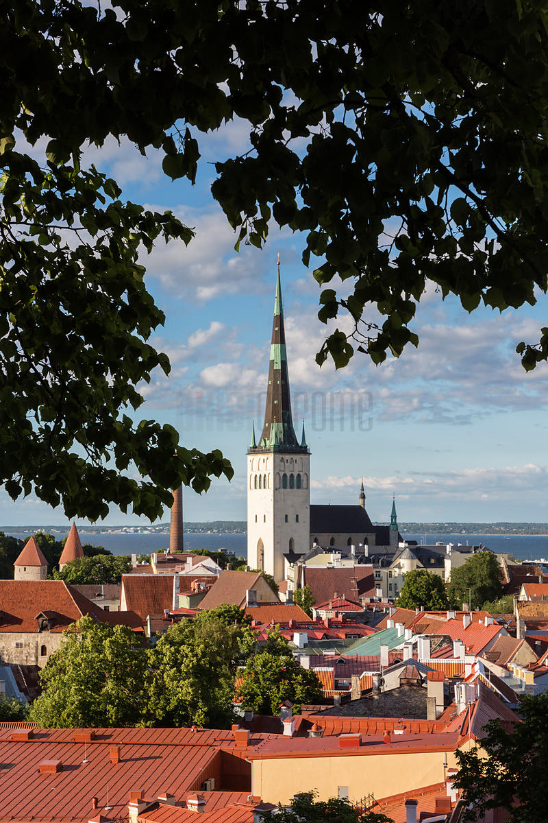 Elevated View of St Olav's Church from Toompea Hill