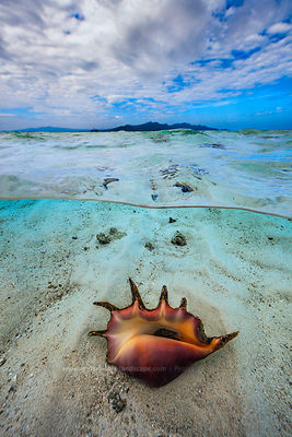 Shell on sand in the lagoon of MAyotte