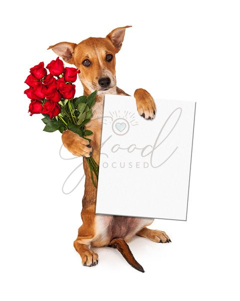 Puppy With Roses and Blank Sign