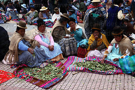 Aymara women chewing coca leaves ( Erythroxylum coca ) at an event promoting traditional uses of the coca leaf , La Paz , Bolivia