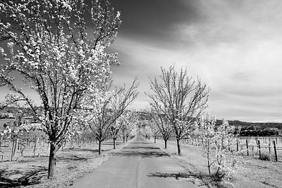 Napa Valley Color Amp Black And White Photos Prints