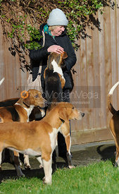 Hounds greet a follower at the meet - The Belvoir Hunt at Hose