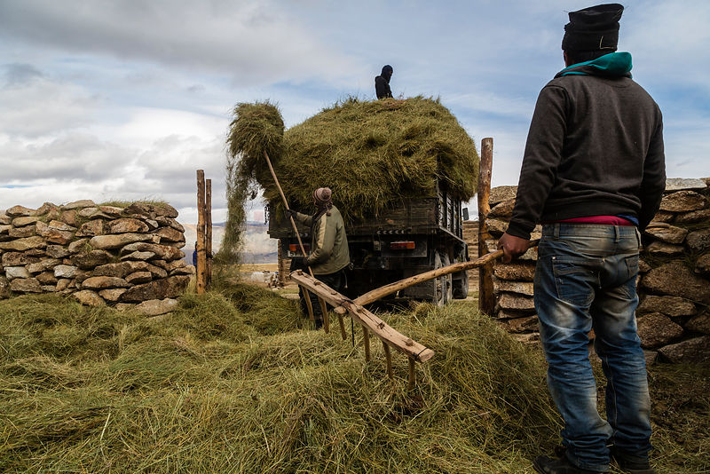 Nomadic People Loading Hay onto a Truck