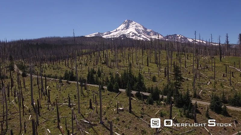 Forest Fire Recovery in the Mt Hood Parkdale area of Oregon.