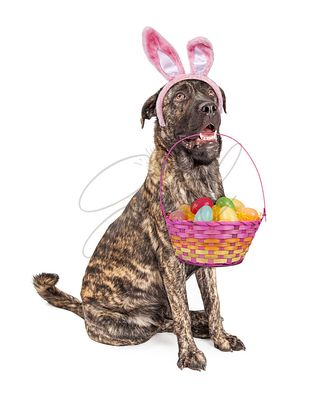 Big Easter Bunny Dog