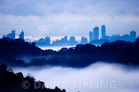 Panama City viewed at dawn across the rainforest of Soberania NP Panama