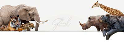 Zoo Animals Hanging Over Web Banner