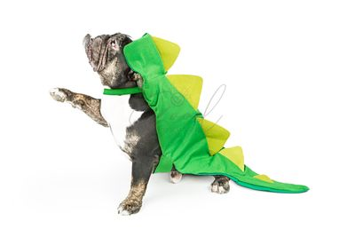 Bulldog Wearing Dinosaur Costume