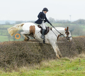 Kitty Taylor jumping a hedge at Wilson's - The Cottesmore Hunt at Manor Farm