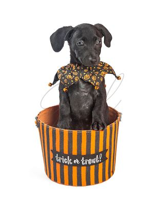 Puppy In Halloween Trick-or-Treating Basket